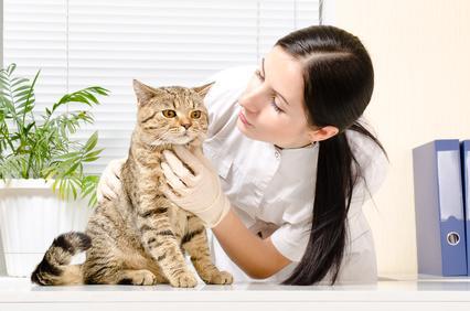 Katze beim Tierarzt Katzenschnupfen