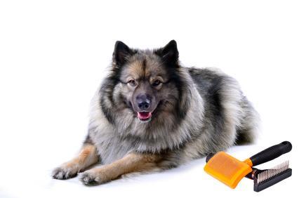 glänzendes Hundefell