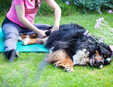 Rheuma beim Hund
