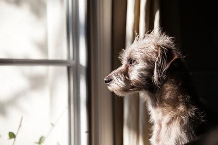 Hund allein zu Hause